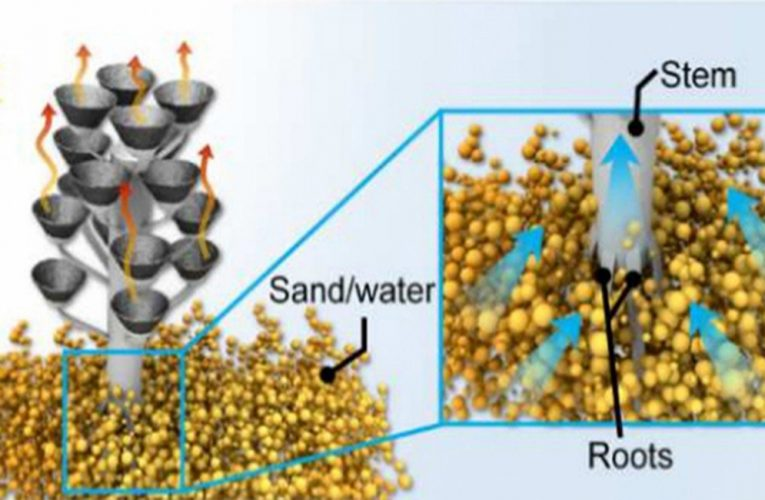 """Turning the sea into drinking water powered by a solar-powered """"tree"""""""
